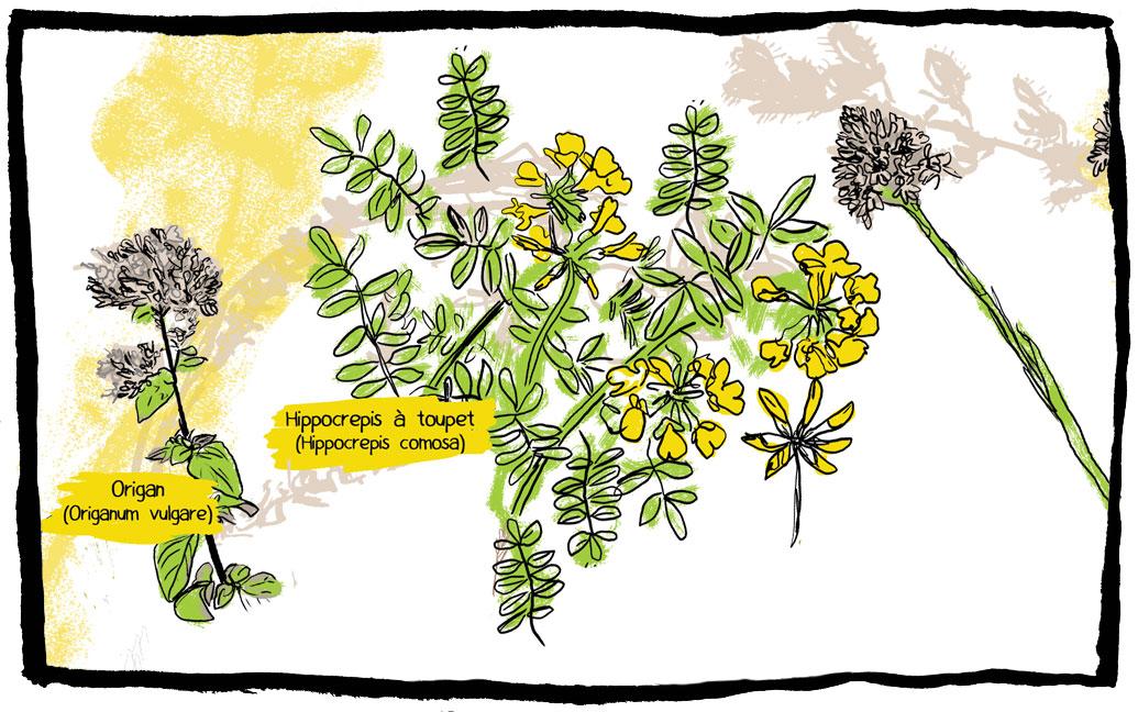 pelouses-articles