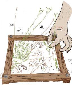 pelouses-suivi