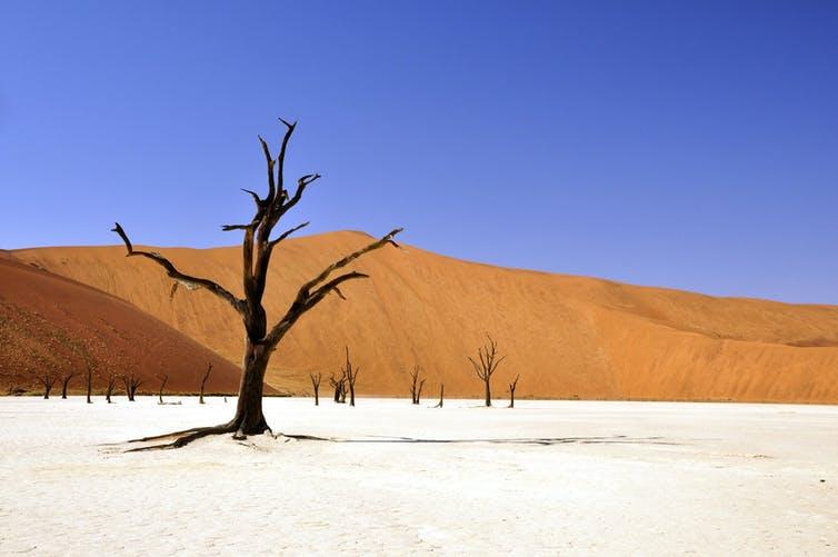 Arbres desséchés dans le désert namibien Katja/pixabay, CC BY