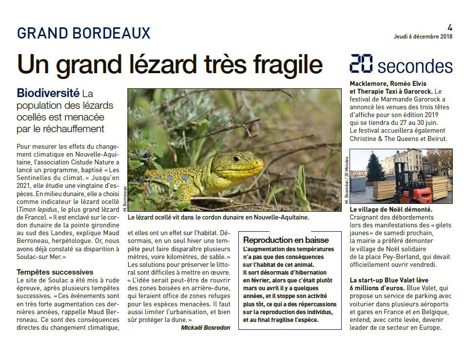 Un grand lézard très fragile - 20 minutes