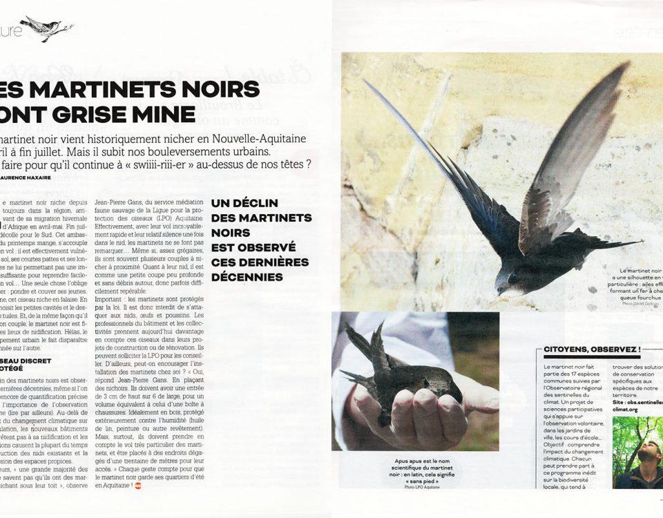 2020-02-29_sudouestmag_p3031_les-martinets-noirs-font-grise-mine_r